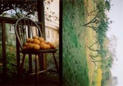 film photograph tangerines mikan chair garden trees lomography diptych