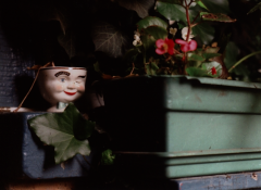 film photograph chiaroscuro shadows flower box pot begonias red white pink little cup winking baileys
