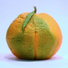 digital photograph closeup macro tangerine orange clementine citrus colorful skin texture green satsuma streak swirl unusual stripe striation