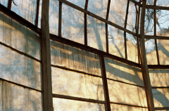 film photograph greenhouse glass windows panels foggy misty steamy shadows plants mysterious sunlight
