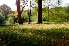 film photo vintage retro field of dandelions puff ball seed summer idyllic dreamy