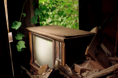 film photograph urbex abandoned building tv plants growing house debris