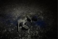 dead rat mummy spray paint