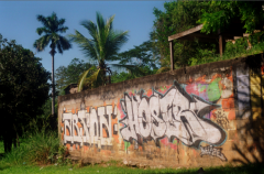 film photography graffiti tropical wall palm trees