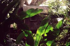 film photography treehouse banana leaves tree