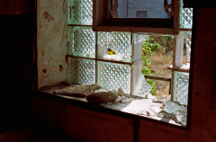 abandoned building film photography broken window