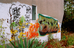 graffiti wall colorful film photograph autumn foliage leaves