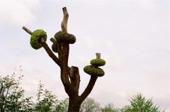 film photograph park tree sculpture art rings donuts green