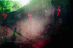 film photograph garden small plastic flamingo ornaments string lights