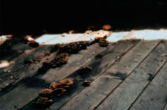 film photograph abandoned building urbex rotting floor mushrooms decay sunlight shadow