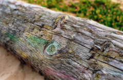film photograph beach log colorful colored pastels rainbow painted magical fairy wood