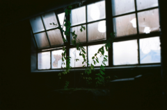 film photography urbex abandoned ruinporn crumbling debris king's park asylum chiaroscuro plants window