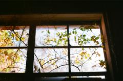 film photography urbex abandoned ruinporn crumbling debris king's park asylum  window plants branches leaves