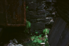 Film photography stone wall old rusty door plants ferns