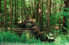film photography nature woods green magical stream trees