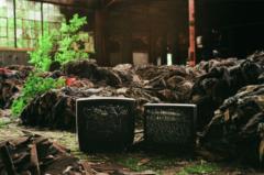 film photography urbex abandoned ruinporn crumbling debris gary indiana screw bolt factory clothing rotting plants old tvs graffiti