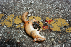 film photography roadkill chipmunk dead sad flies asphalt