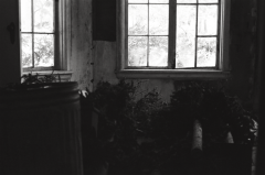 abandoned urbex film photography windows chiaroscuro christmas trees