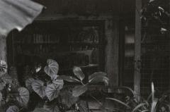 film photography garden library window