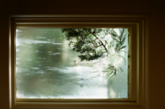 film photography window tree branches sunlight