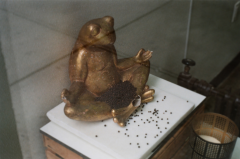 film photograph frog coffee buddha yoga meditation