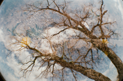 double exposure lomo lomography multiple tree sky branches