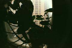 plant leaves houseplant window silhouette shadow fisheye lens
