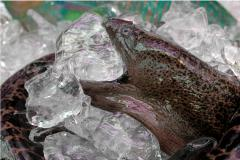 film photography moray eel market ice fresh gaping mouth creepy glistening shiny purple iridescent